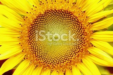 Design Tip: Get hi-res image previews from iStock